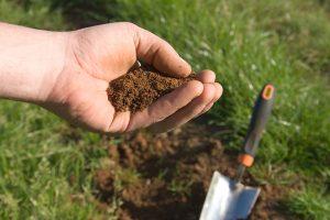 Hướng dẫn cách cải tạo đất trồng rau sạch trở lên giàu dinh dưỡng, tơi xốp hơn